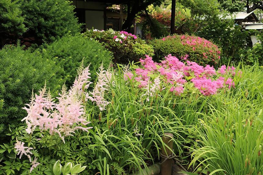 様々な草花