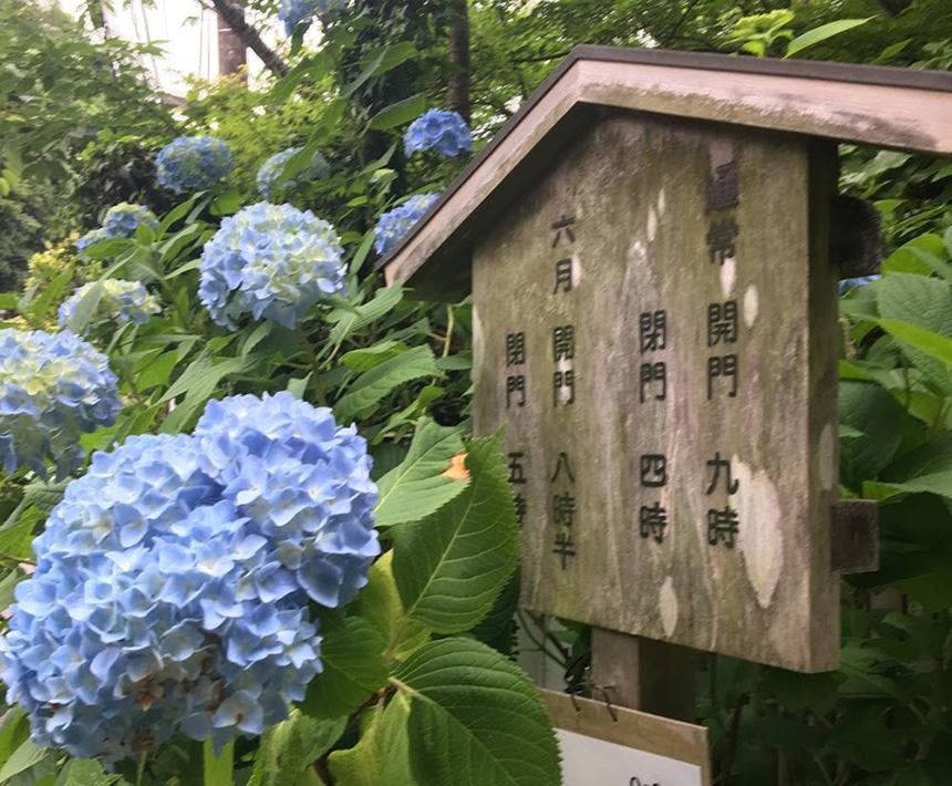 北鎌倉・明月院の看板