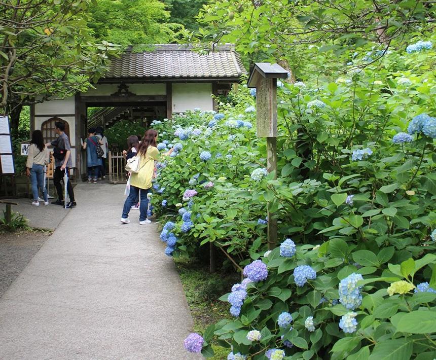 北鎌倉・明月院の入り口