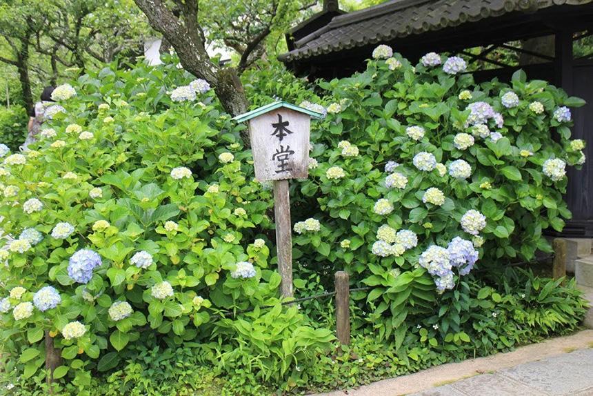 北鎌倉・東慶寺の本堂