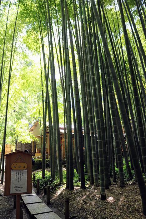鎌倉・報告寺の竹林の奥にみえる休耕庵