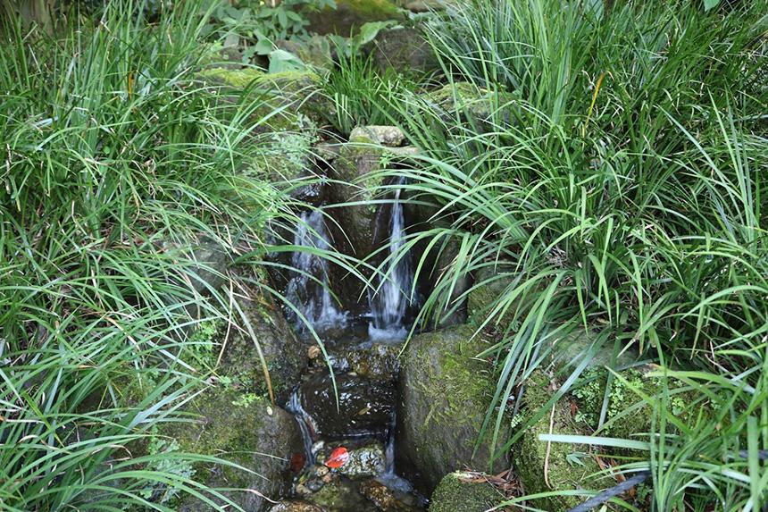 鎌倉・報告寺の湧水