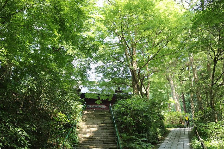 鎌倉・妙本寺の木々