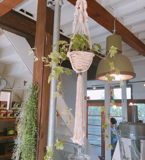 湘南オーガニックサラダ専門店『very veggy by BRUNCHES(ベリー ベジー バイ ブランチーズ)』の店内植物