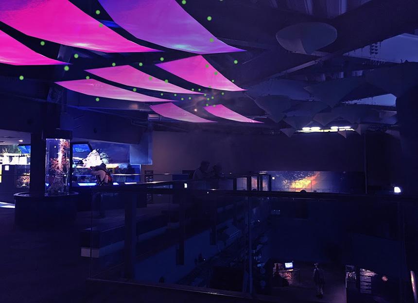 ゆらぎの海廊~Day& Night ~