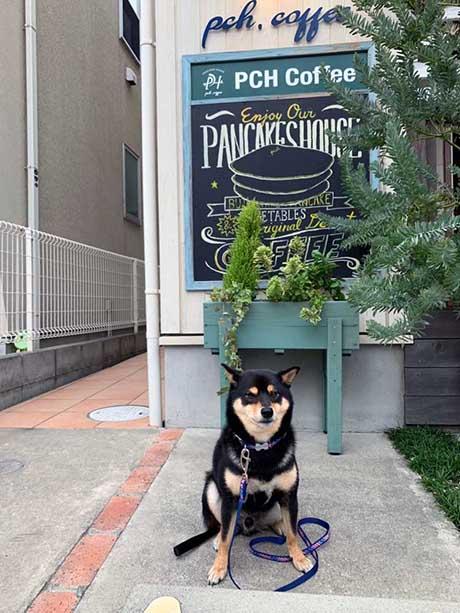 鵠沼海岸のパンケーキカフェ『PCH Coffee』は犬同伴OK