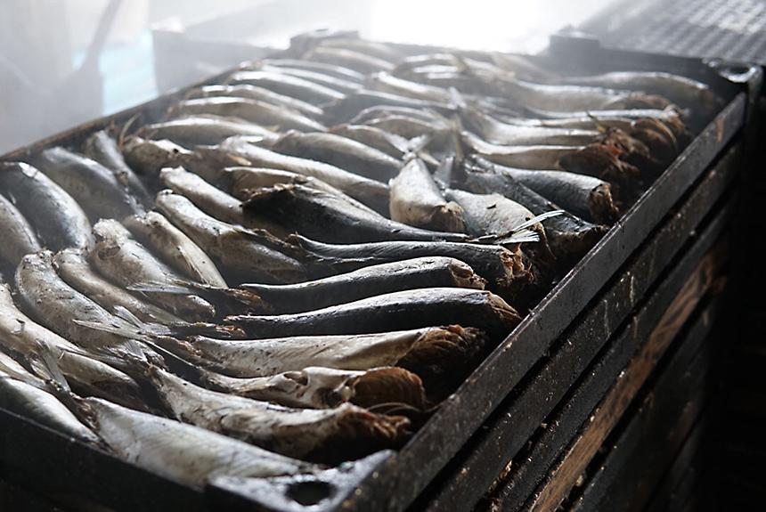 沼津で水揚げされる魚