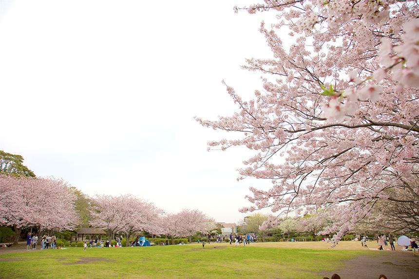 藤沢市の長久保公園
