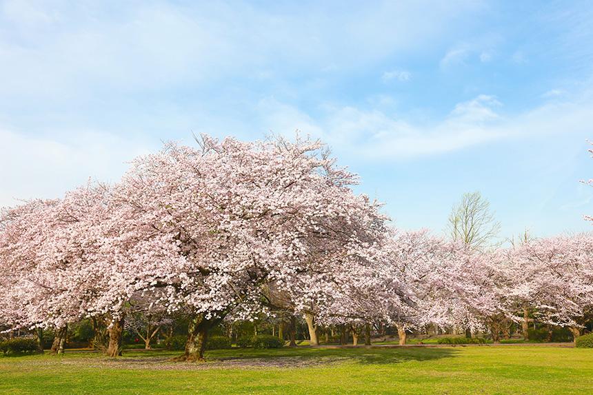 藤沢市の大庭城址公園
