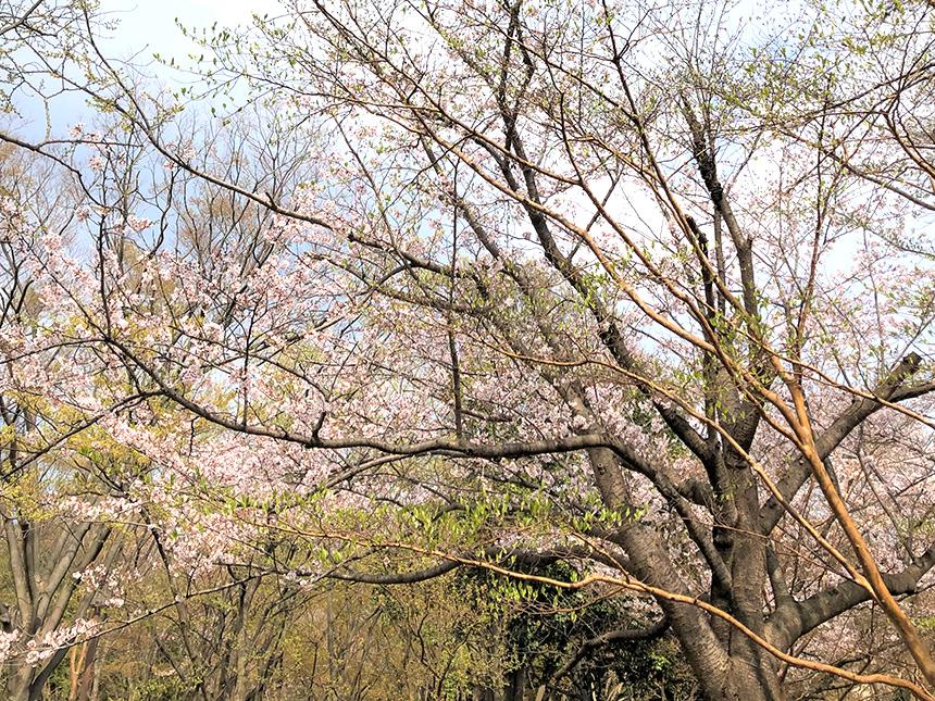 茅ヶ崎中央公園(茅ヶ崎市)