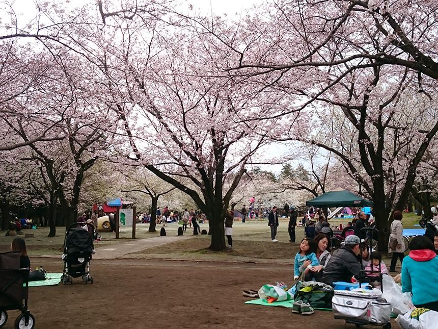 平塚市総合公園(平塚市)