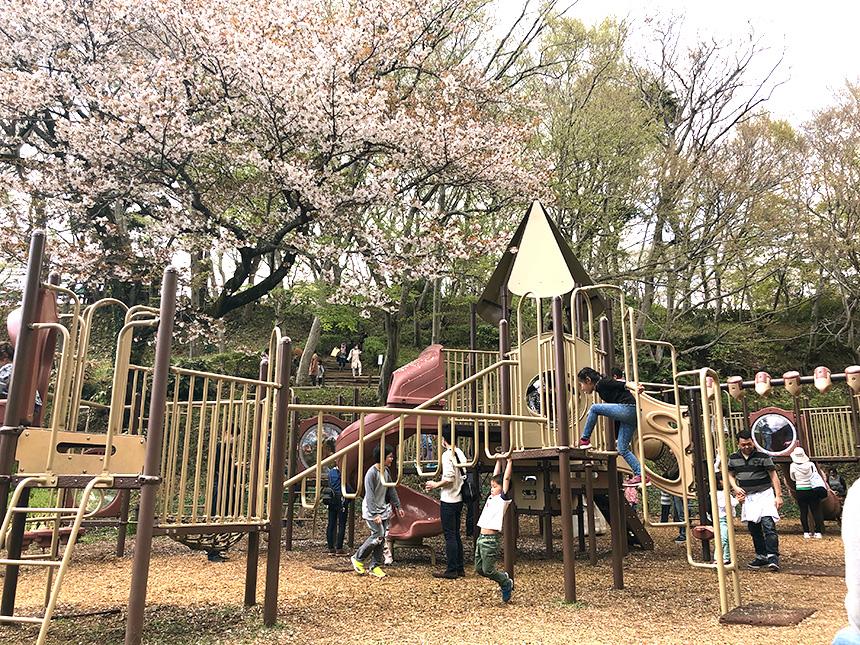 吾妻山公園(二宮町)