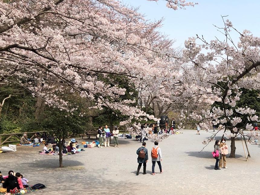 藤沢市の新林公園