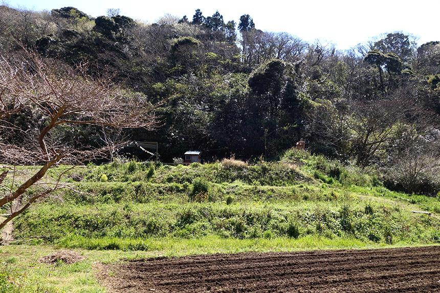 無農薬無化学肥料の野菜を育てる畑