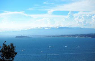 はやま三ヶ丘山緑地から眺める湘南の海
