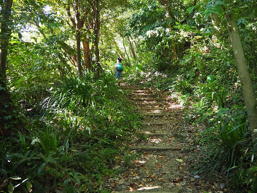 はやま三ヶ岡山緑地のハイキングコース