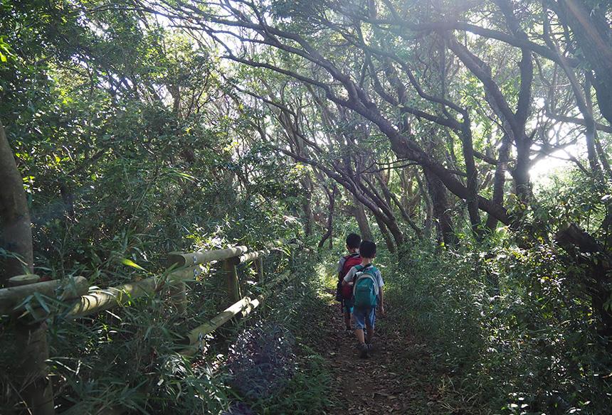 はやま三ヶ岡山緑地の山道