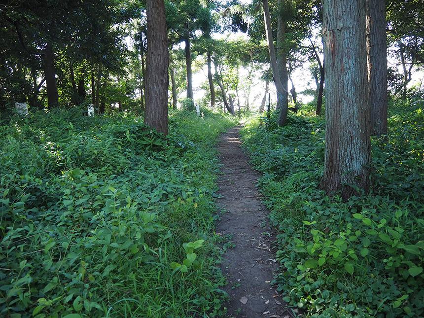 はやま三ヶ岡山緑地のハイキング
