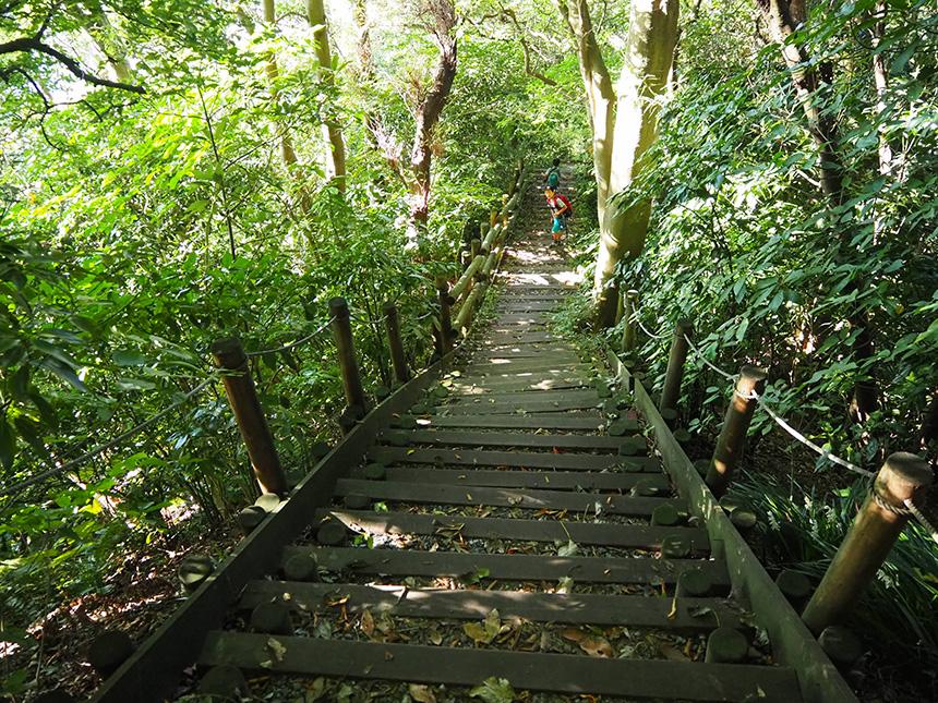 はやま三ヶ岡山緑地の階段道