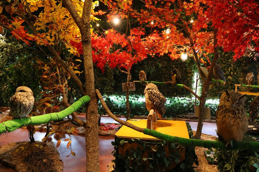 鎌倉『鎌倉乃フクロウの森』の入り口