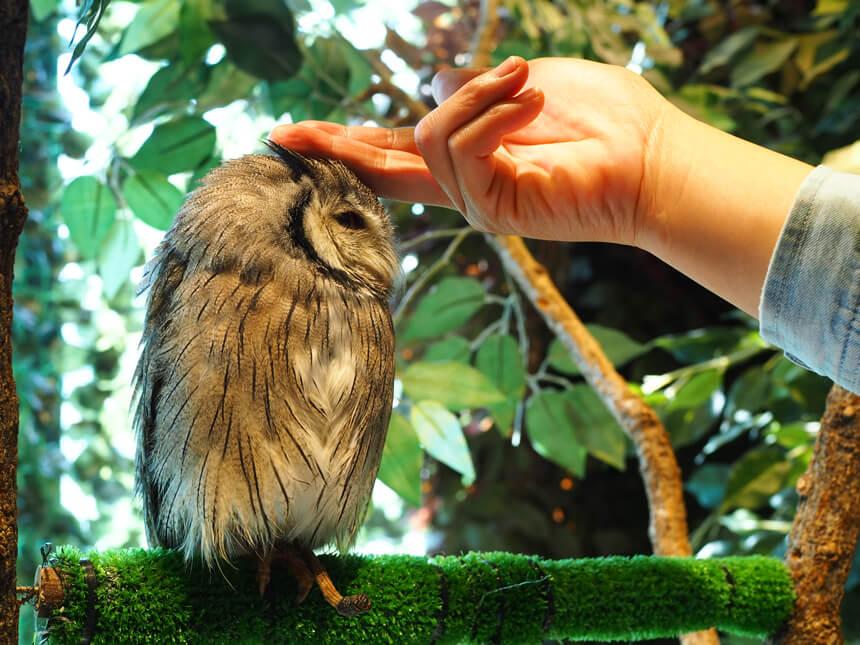 鎌倉『鎌倉乃フクロウの森』のフクロウ