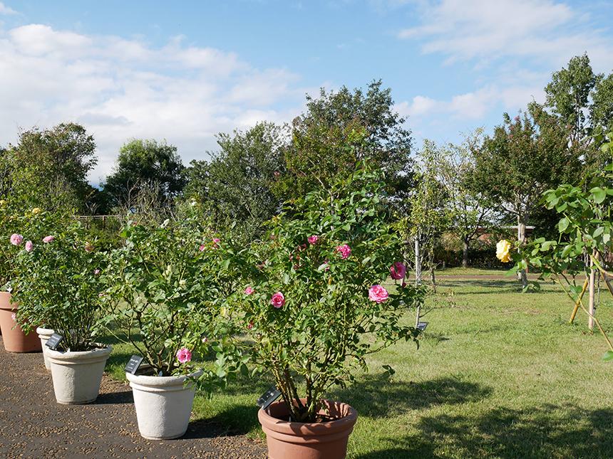 湘南・平塚の植物園『花菜ガーデン』のフラワーゾーン