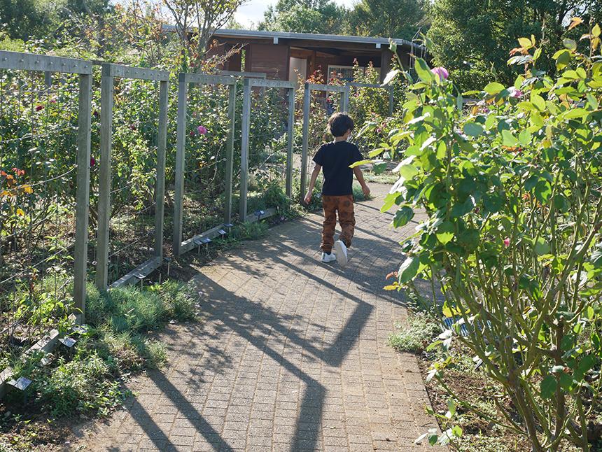 湘南・平塚の植物園『花菜ガーデン』の風ぐるま迷図を歩く子ども