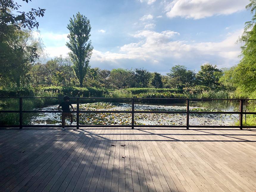 湘南・平塚の植物園『花菜ガーデン』の「尾根見の池」