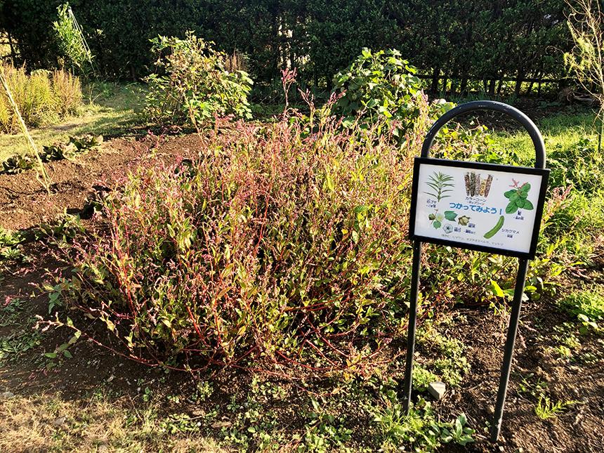 湘南・平塚の植物園『花菜ガーデン』の畑