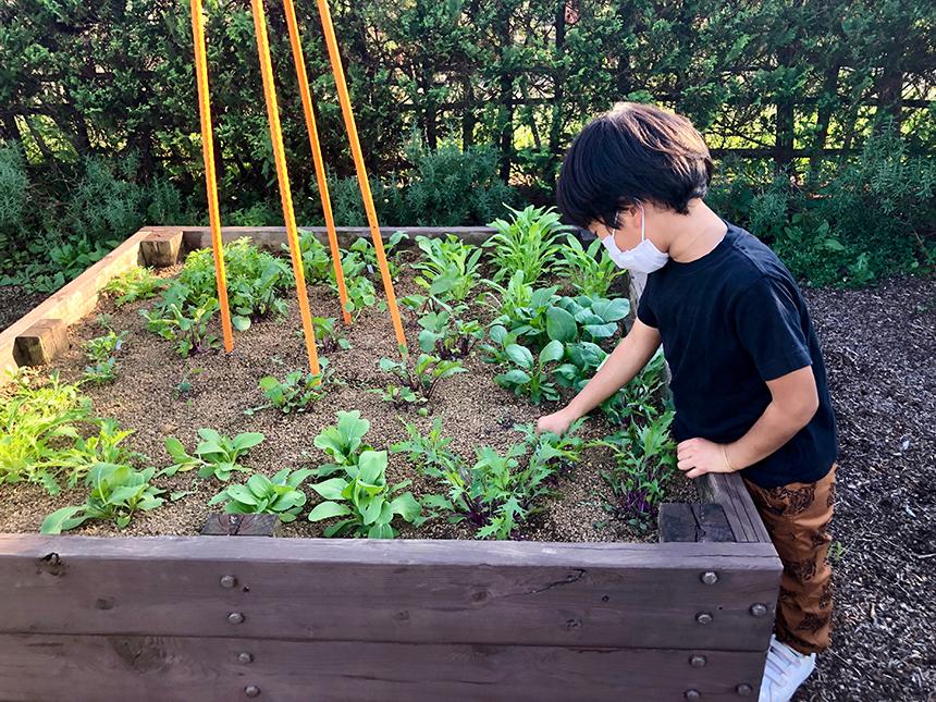 湘南・平塚の植物園『花菜ガーデン』の畑で育つ野菜やハーブ