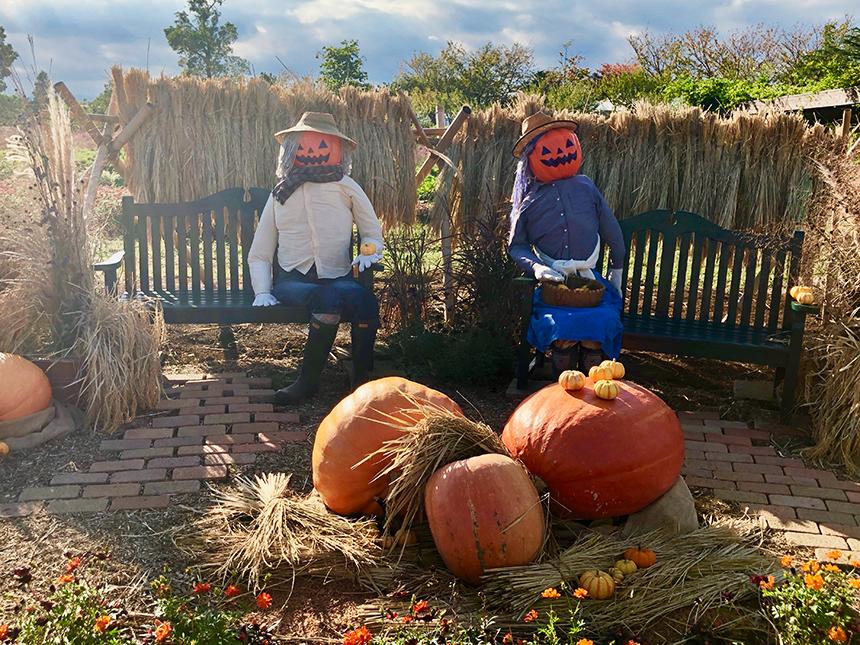 湘南・平塚の植物園『花菜ガーデン』のかぼちゃランタン夫妻