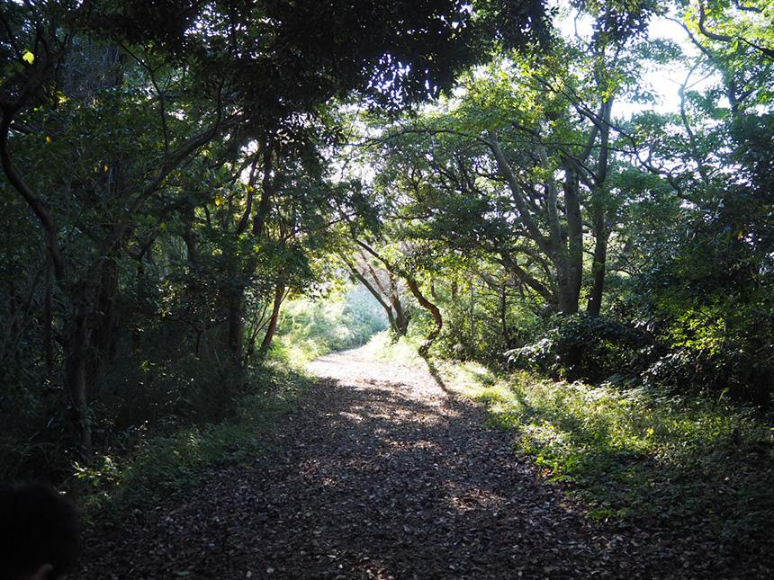 葉山『南郷上ノ山公園』のハイキングコース