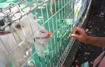 『平塚総合公園』のふれあい動物園の餌やり