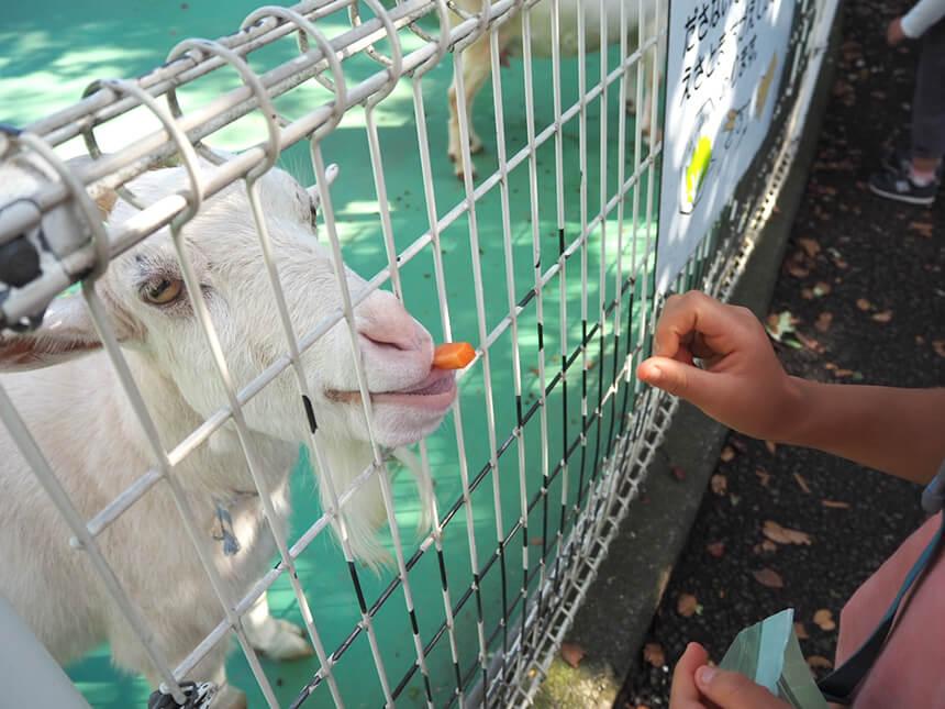 『平塚市総合公園』のふれあい動物園の餌やり