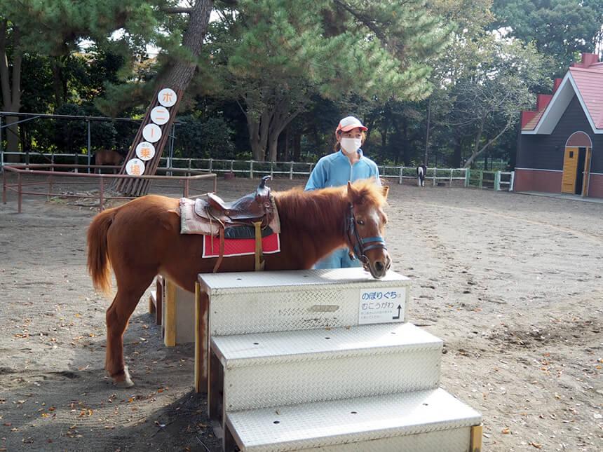 『平塚市総合公園』のポニー乗馬
