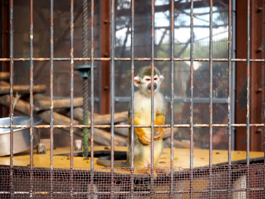 『平塚市総合公園』ふれあい動物園のサル