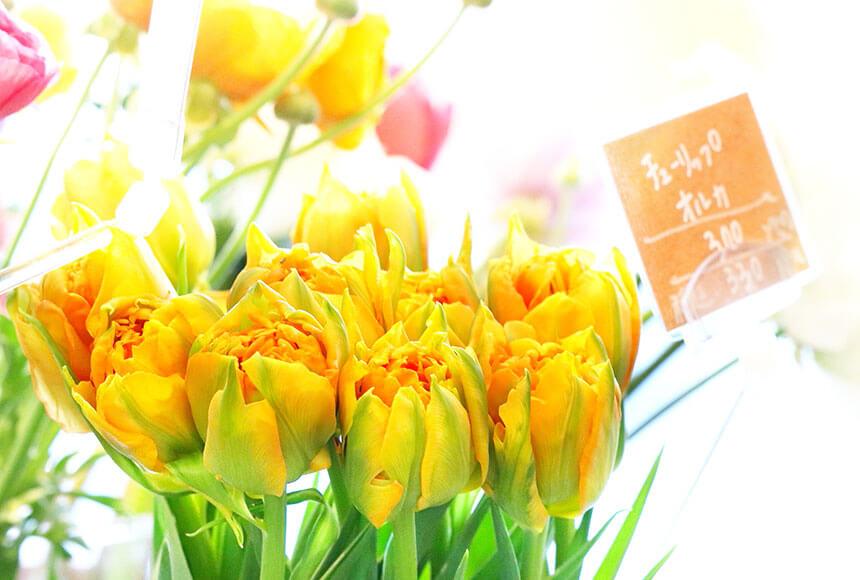 藤沢のお花屋さん「FLORAL WIND'S(フローラルウインズ)」のチューリップ