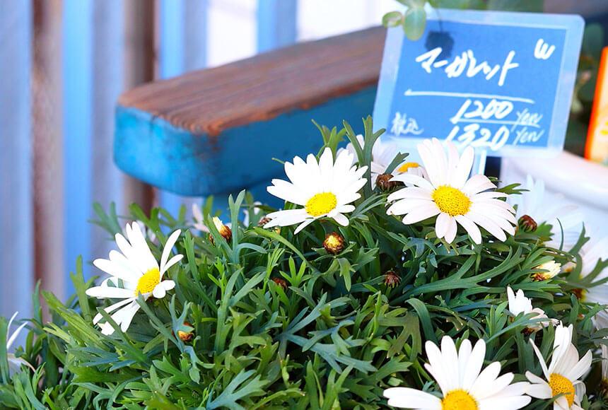 藤沢のお花屋さん「FLORAL WIND'S(フローラルウインズ)」の鉢植え