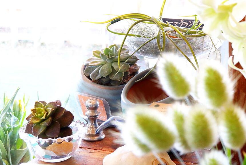 藤沢のお花屋さん「FLORAL WIND'S(フローラルウインズ)」の多肉植物