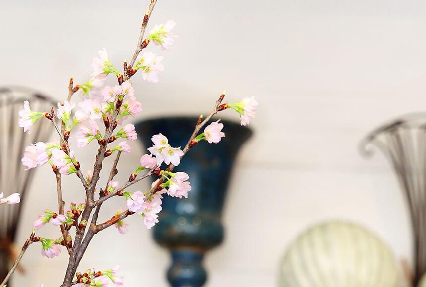 藤沢のお花屋さん「FLORAL WIND'S(フローラルウインズ)」の桜