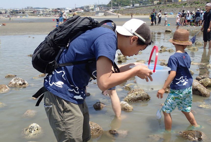 江ノ島・鎌倉『海岸生物観察会』に参加するパパ