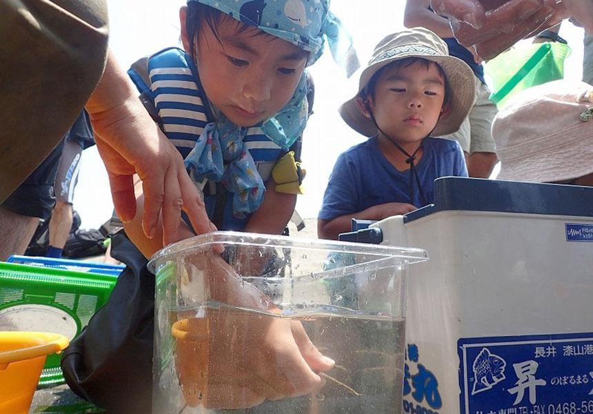 江ノ島・鎌倉『海岸生物観察会』に参加する子ども