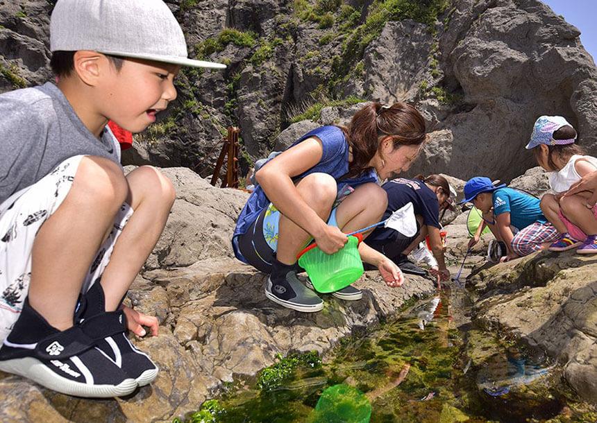 江ノ島『海岸生物観察会』では岩場で観察