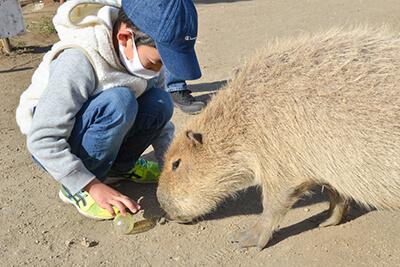 横須賀『長井海の手公園 ソレイユの丘』のえさやり体験