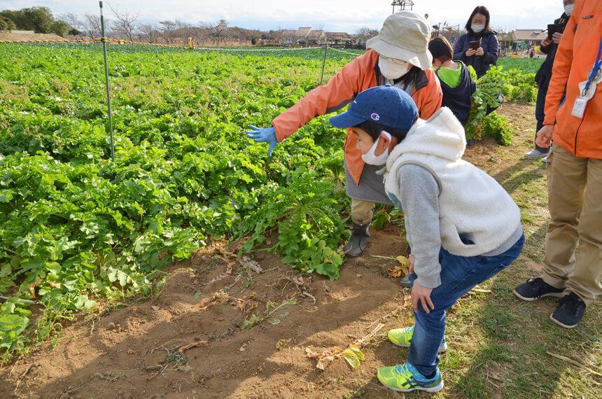 横須賀『長井海の手公園 ソレイユの丘』で野菜の収穫体験