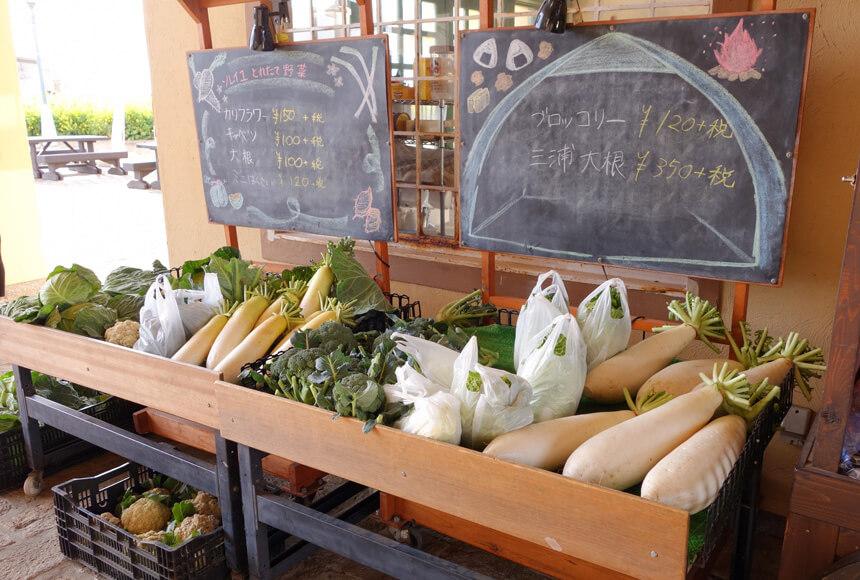 横須賀『長井海の手公園 ソレイユの丘』の地場野菜
