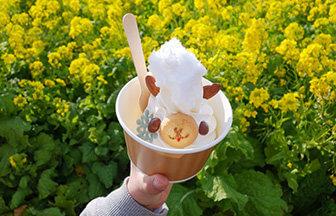 横須賀『長井海の手公園 ソレイユの丘』