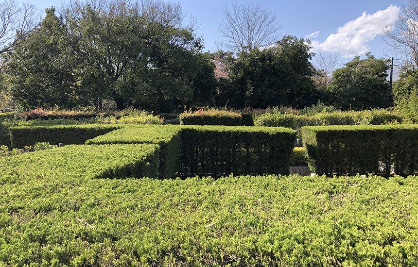 湘南藤沢・長久保公園の生垣の迷路