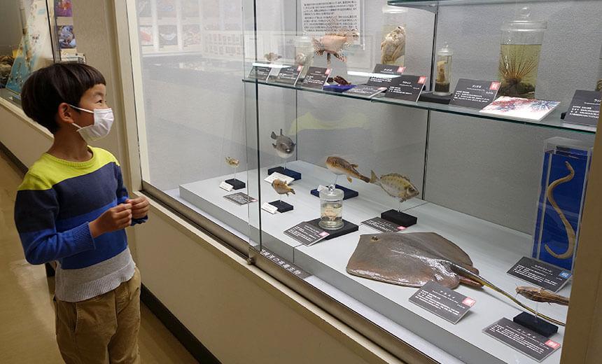 葉山しおさい博物館の有毒生物を見る子ども