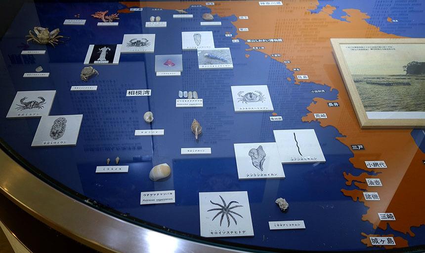 葉山しおさい博物館の相模湾の海洋生物展示